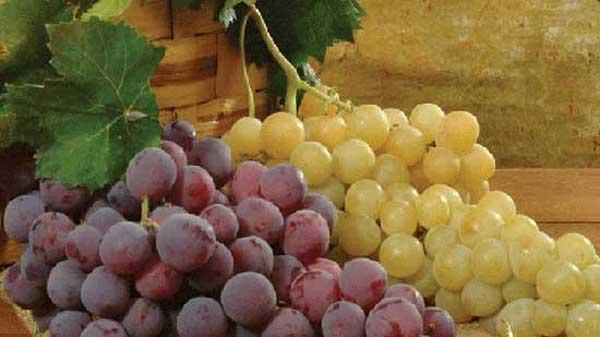 Festival internazionale uva da tavola igp a mazzarrone - Uva da tavola di mazzarrone ...